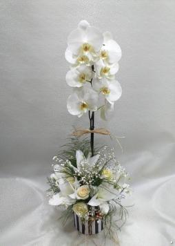 tek dal orkide arajmanı