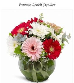 Fanusta gelbere çiçekleri