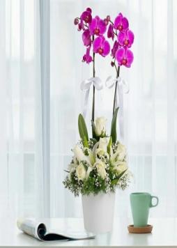 Mor orkide arajmanı
