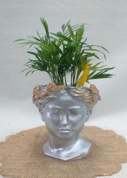 Helen saksıda palmiye