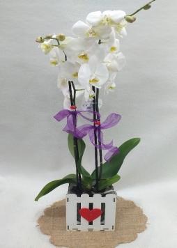 Dekoratif kutuda orkide