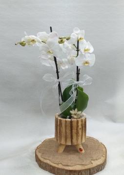 Tahta saksıda çiftli orkide
