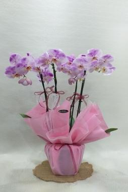 İthal 4 dal özel renk orkide