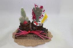 2'li dekoratif saksıda kaktüsler