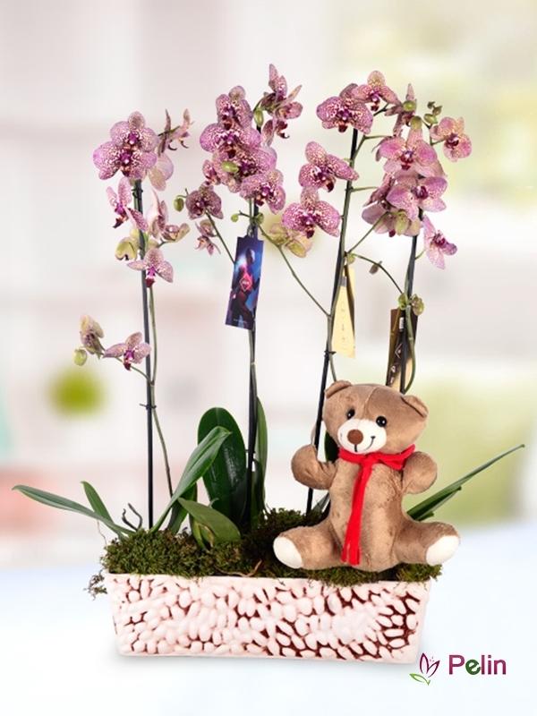 Ayıcık Figürlü Orkidem