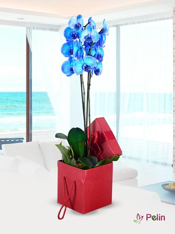Özel Tasarım Kutu İçi Mavi Orkide