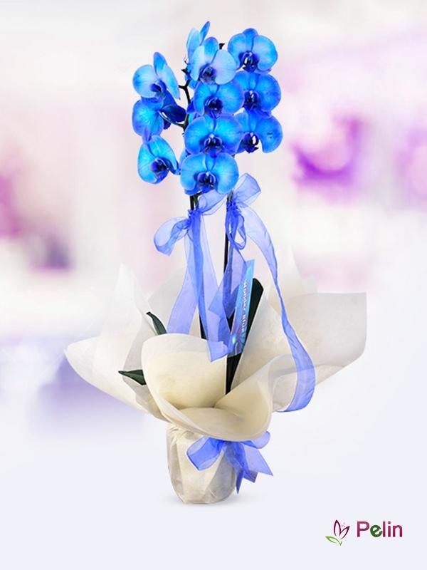 Mavi Orkide Çiçeği