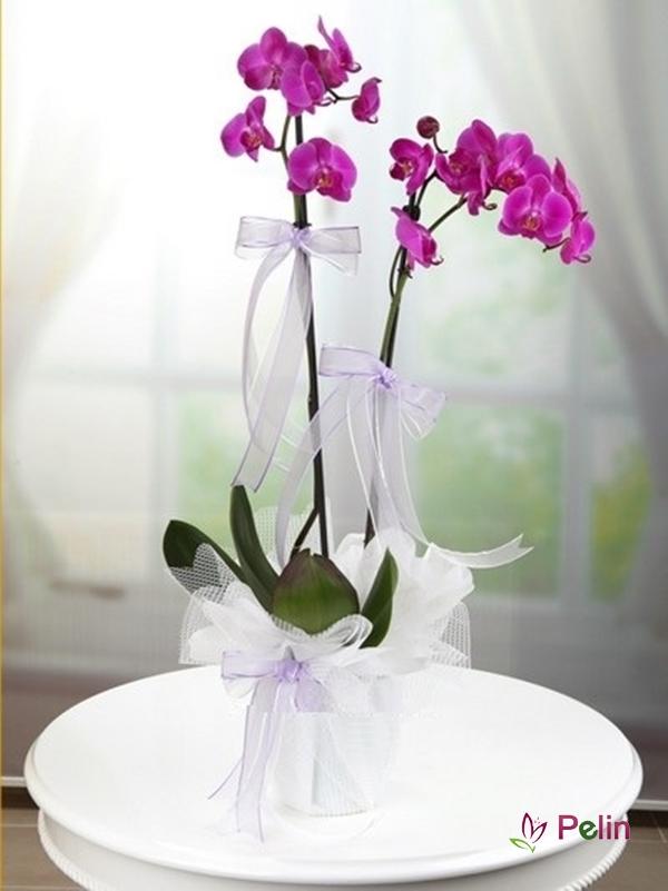 2 Dal Lila Orkide